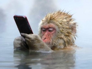 iphone monkey