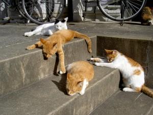 猫 | 暑い